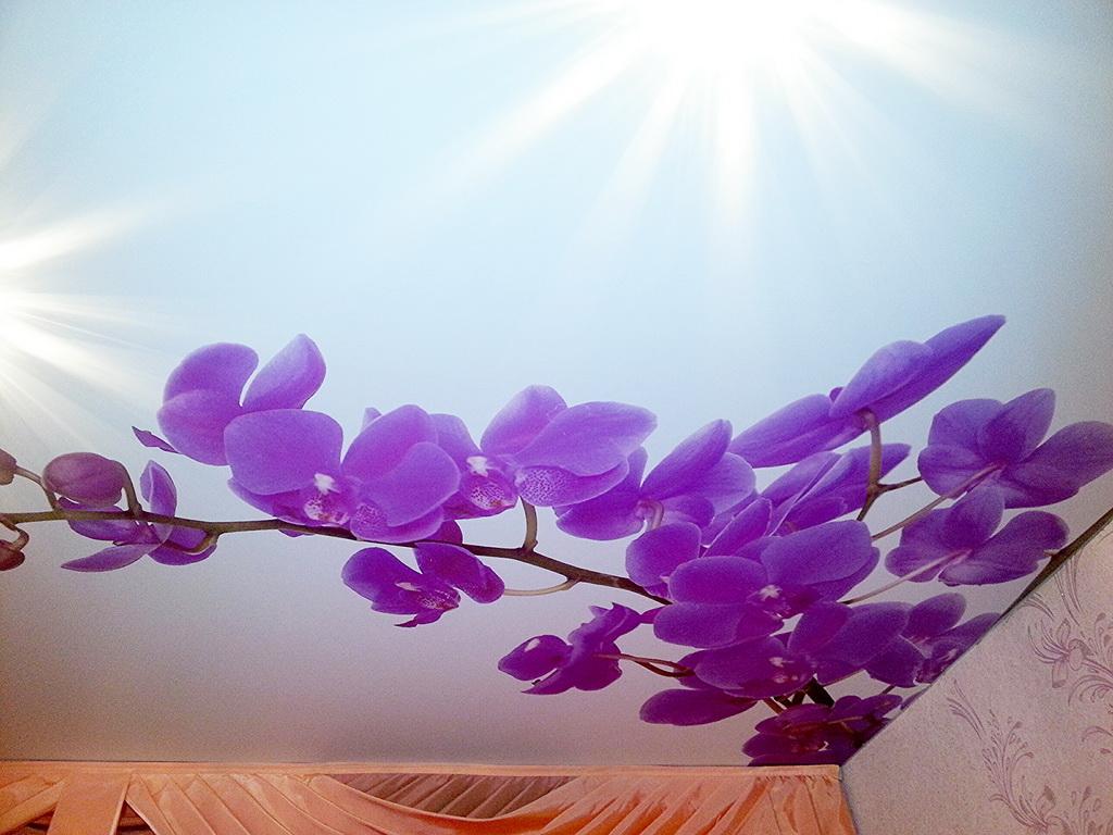 натяжные потолки расцветки с рисунком фото таком