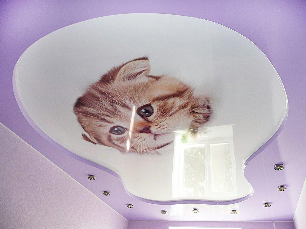 Натяжные потолки с фотопечатью фото кошки