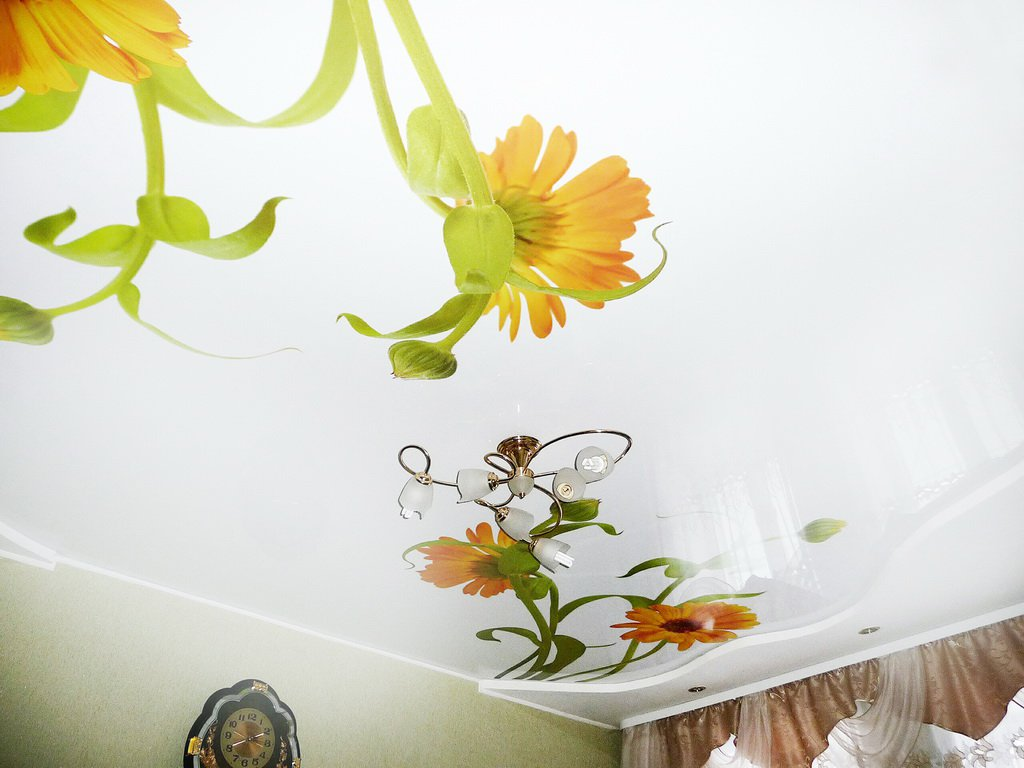 виста дизайн фотопечать натяжные потолки каталог такое кокосовый субстрат